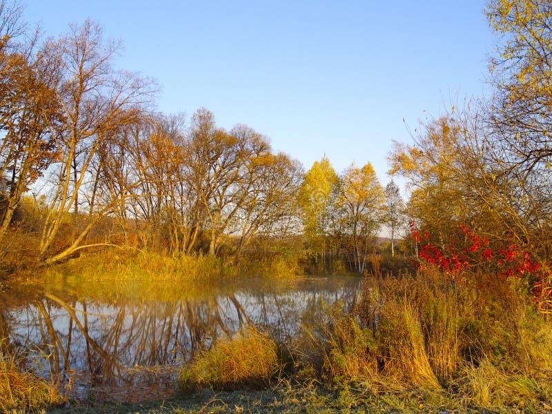 Autumn sunny day at wood lake royalty free stock image