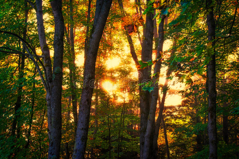 Autumn Sunrise Glow em uma floresta fotos de stock royalty free