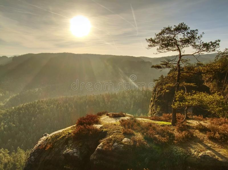 Autumn Sunrise La forêt profonde dans de belles cimes d'arbre accidentées a augmenté de brumeux images libres de droits