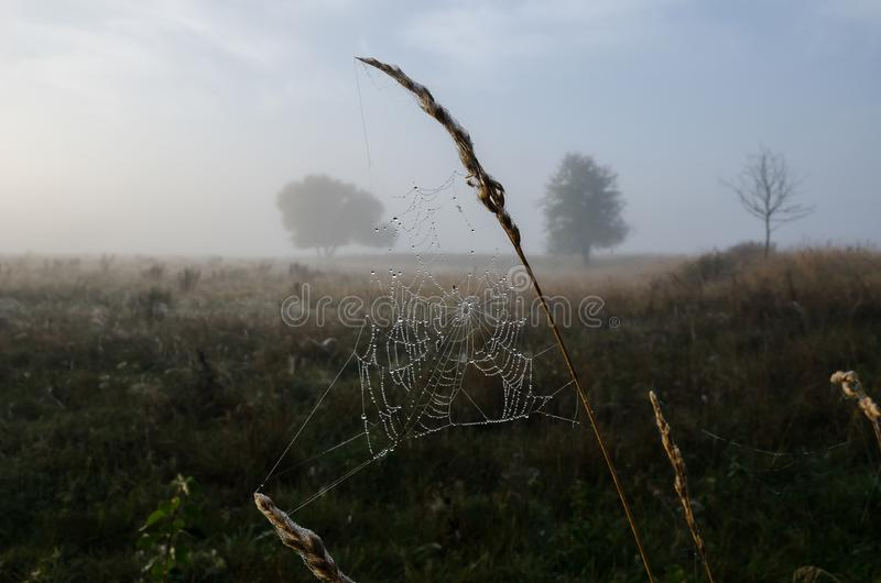 Web with brillyantami water misty morning stock photography