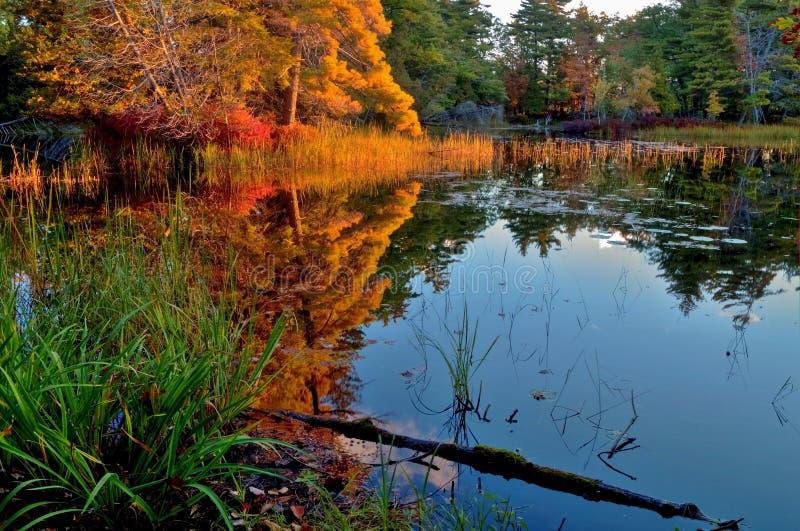 Autumn Sunrise Reflections stock image