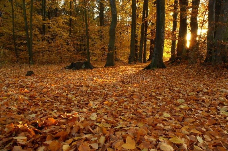 Download Autumn sunset stock photo. Image of branch, european - 21890950