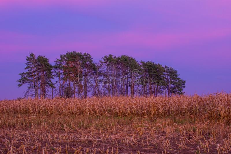 Autumn sunset in a cornfield. royalty free stock photos