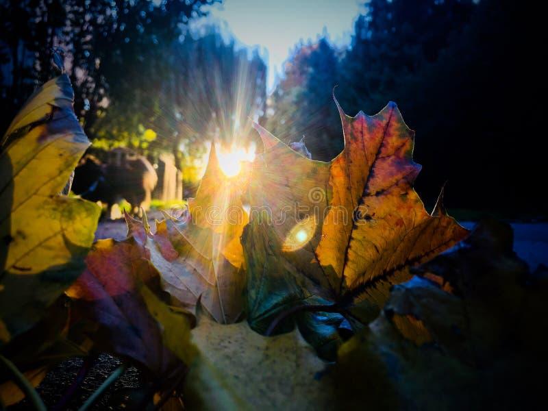 Autumn Sunset dietro le foglie immagine stock
