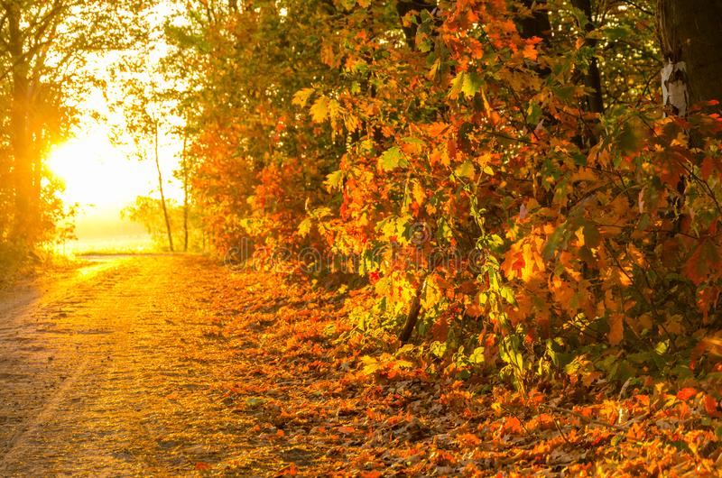 Autumn sunset. Fall scene. Warm autumn forest in sunset light stock image