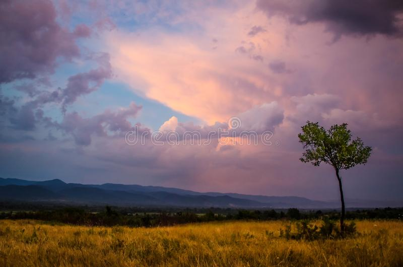 Autumn sunset landscape photography / Small tree isolated on a golden high plain in foreground with amazing orange purple cloudy s royalty free stock photography
