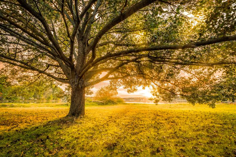Autumn sunset in Parsippany, New Jersey. On the shore of Parsippany lake. Sun Rays burst through a large tree canopy stock images
