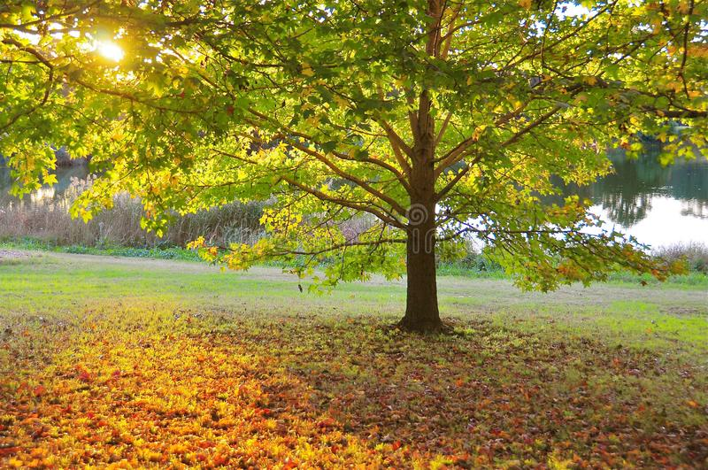 Download Autumn Sunset - Warms And Soothes Stock Image - Image of colour, emotional: 14223699