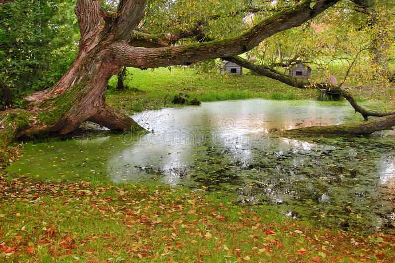 Autumn in the Swamp. Autumn colors in a swamp on a October day stock image