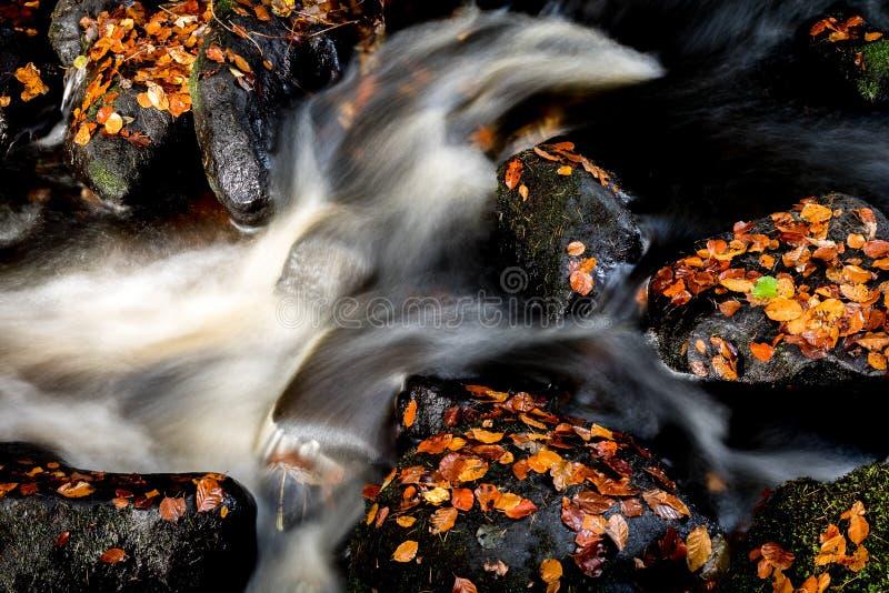 Autumn Swirls royalty free stock photo