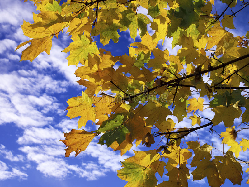 Download Autumn sycamores stock photo. Image of autumn, fall, cotton - 4121952
