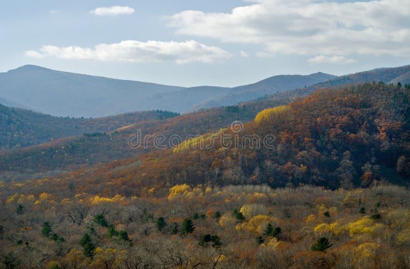 Autumn taiga 1