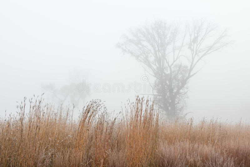 Autumn Tall Grass Prairie geado imagens de stock