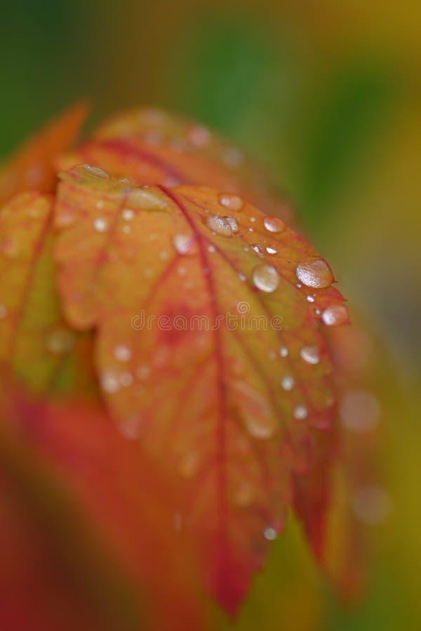 Autumn tears stock photos
