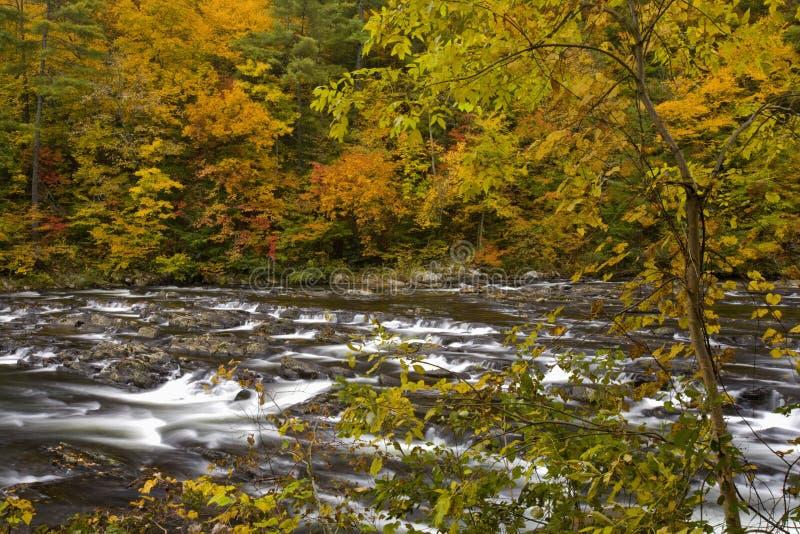 Autumn, Tellico River, Cherokee NF royalty free stock image
