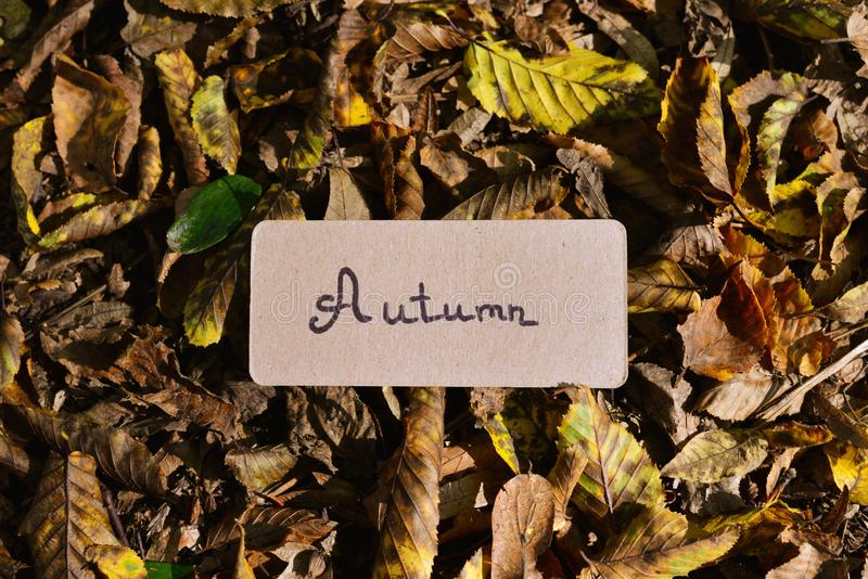 Autumn text on a card in autumn park in sunny rays.  Background. Copy space. Top view royalty free stock images