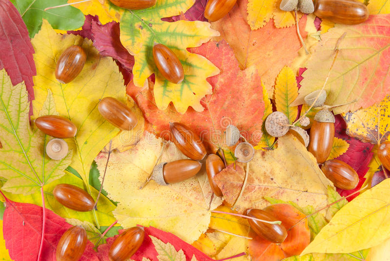 Download Autumn texture with acorn stock image. Image of autumn - 26847823