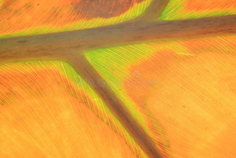 Autumn Texture y colores - hoja de la vida fotografía de archivo libre de regalías