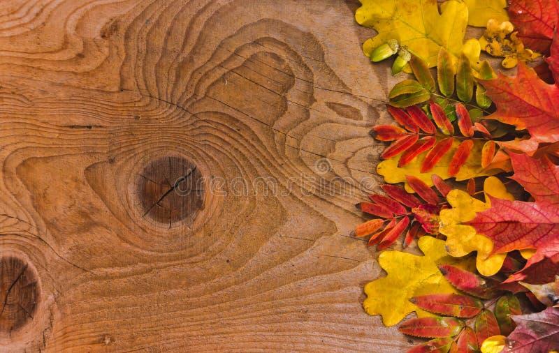 Autumn Thanksgiving Background Folhas coloridas imagens de stock