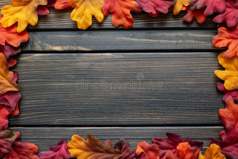 Autumn Thanksgiving background and frame with leaves and small pumpkins surrounding the frame royalty free stock photo