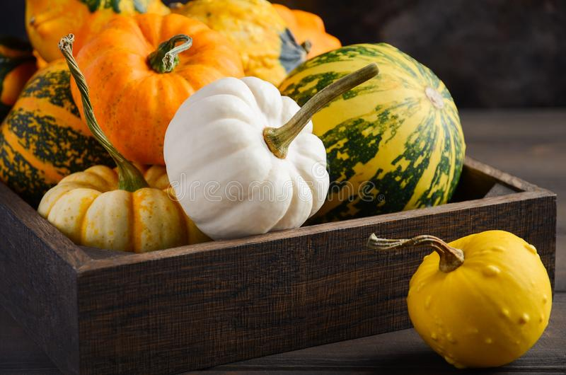 Autumn thanksgiving composition with assorted mini pumpkins in wooden tray on a wooden table. stock photo