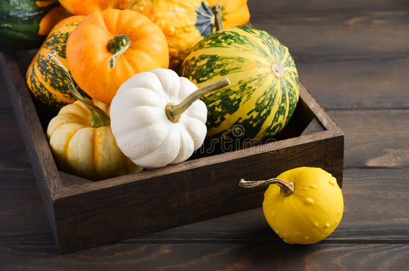 Autumn thanksgiving composition with assorted mini pumpkins in wooden tray on a wooden table. royalty free stock photography