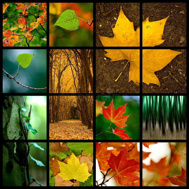 Autumn Theme. D collage - Beautiful colored fall pictures royalty free stock image