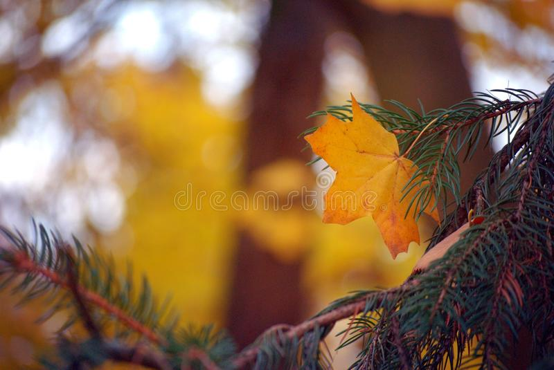 Autumn theme. Colorfull autumn theme. Leaves, sunshine, so many colours. Best photos for backgrounds royalty free stock images