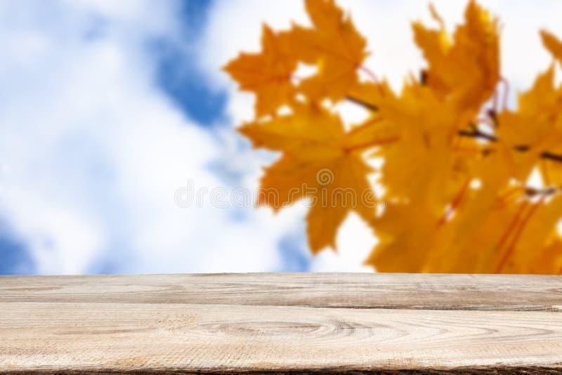 Autumn theme. Wooden planks on the background of autumn trees stock image