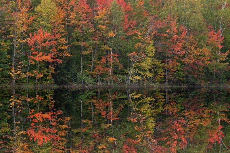 Autumn, Thornton Lake Reflections stock photos