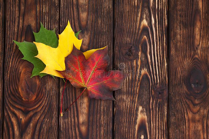 Three colorfull maple leaves on a brown wooden background stock photography