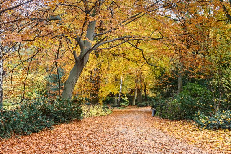 Autumn Tiergarten Park in Berlin. Germany. Beautiful Autumn Tiergarten Park in Berlin. Germany royalty free stock image