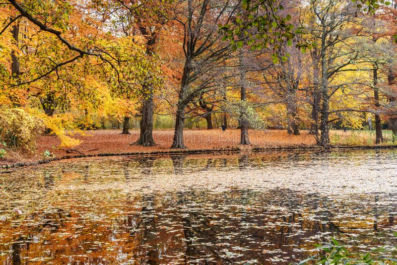 Autumn Tiergarten Park in Berlin. Germany. Beautiful Autumn Tiergarten Park in Berlin. Germany stock image