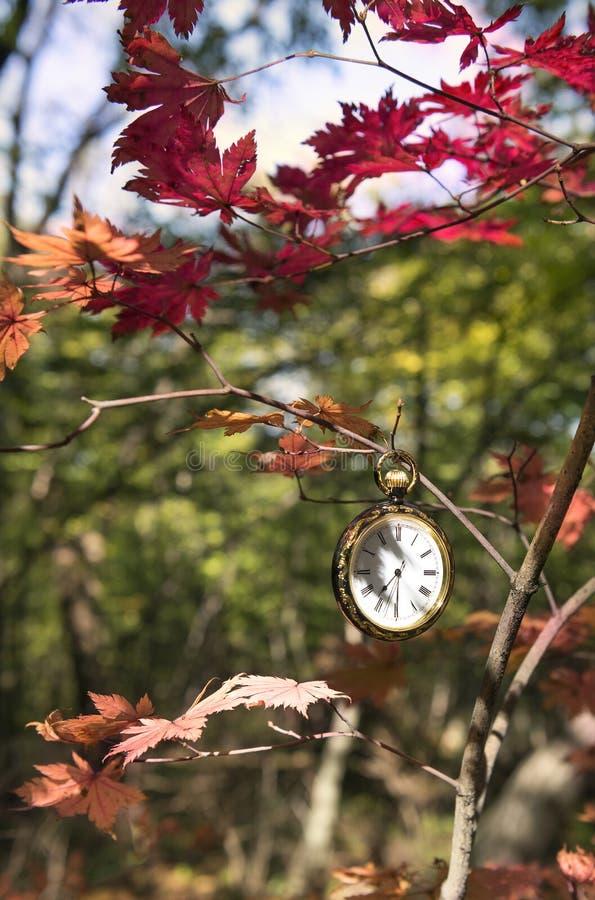 Autumn Time imagem de stock royalty free