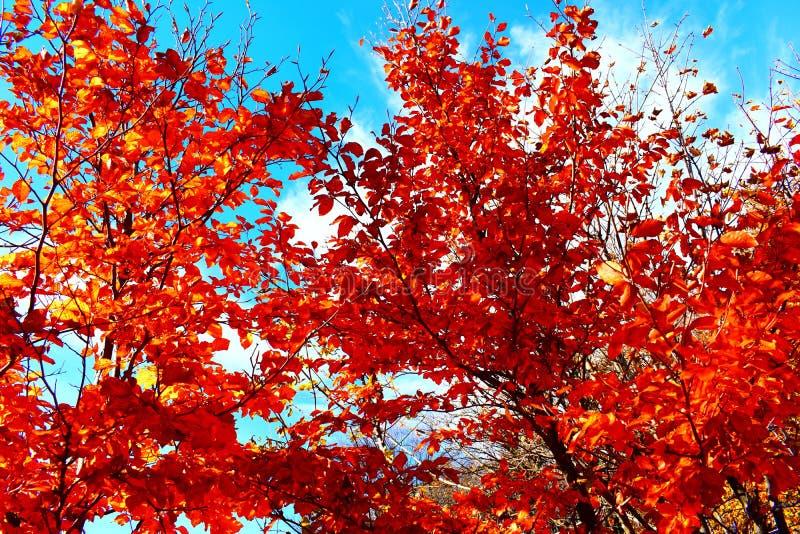 Autumn Time stock foto's