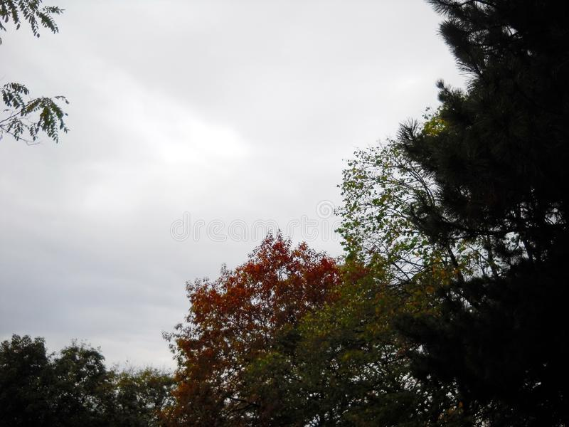 Autumn time royalty free stock photo
