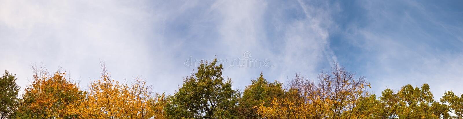 Autumn time. Colorful leaves of trees tops on sky background. Super wide angle natural background, banner format.  stock images