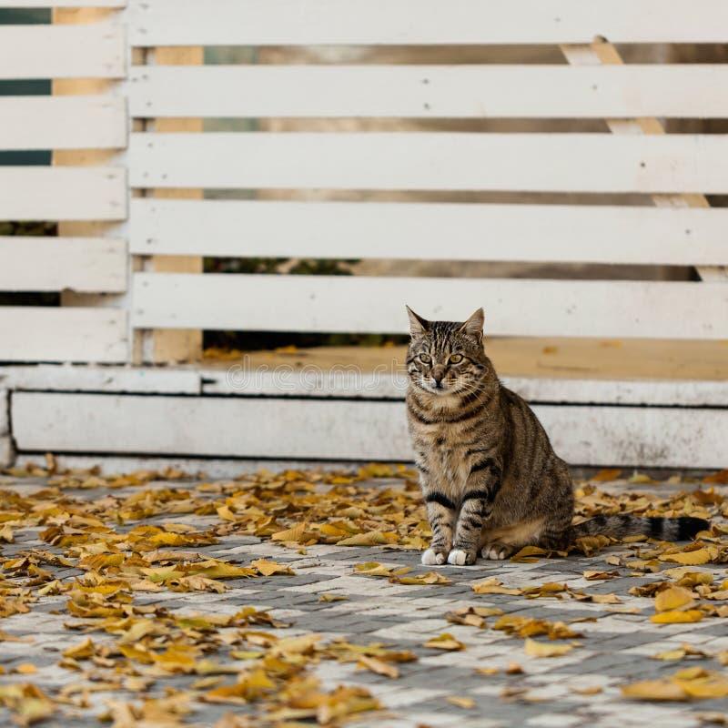 Autumn Time De grijze kat zit dichtbij de gevallen gele bladeren tegen royalty-vrije stock foto