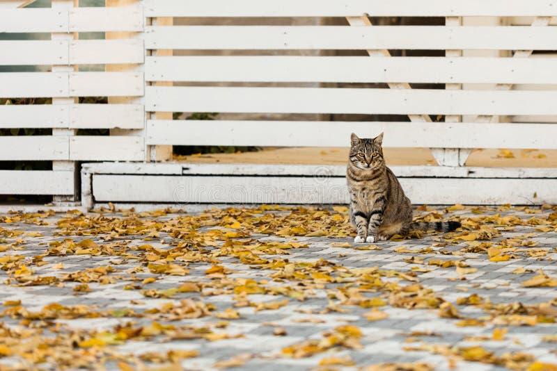 Autumn Time De grijze kat zit dichtbij de gevallen gele bladeren tegen royalty-vrije stock foto's