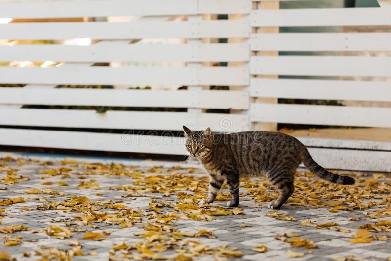 Autumn Time De grijze kat zit dichtbij de gevallen gele bladeren tegen royalty-vrije stock afbeelding