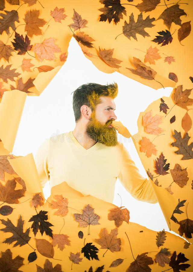 Autumn time for fashion. Autumn concept. Male autumn fashion concept. Autumn foliage. Leaf fall. Young bearded man in stock photos