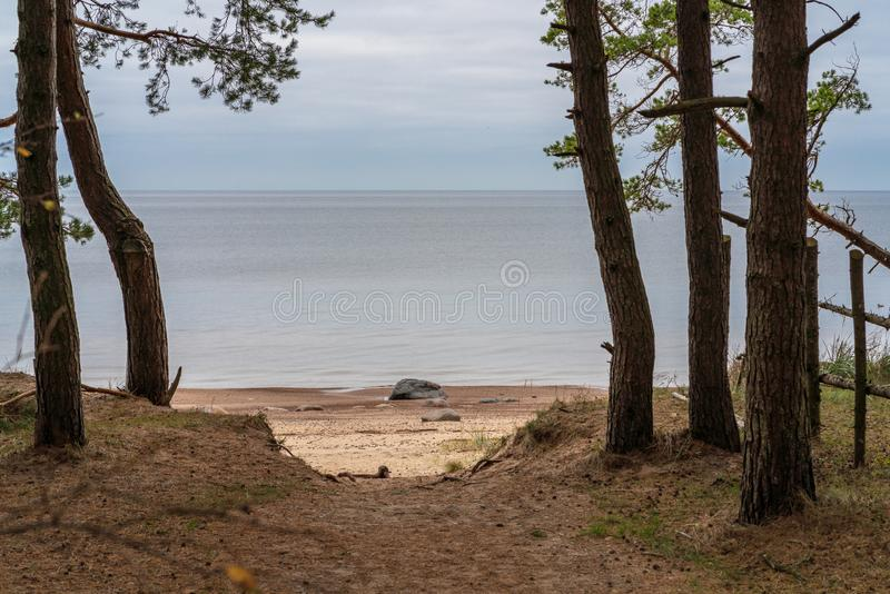 The path through the cones goes to the beach. Autumn time, nature scenery by the sea, the path through the cones goes to the beach where stones are seen near the stock images
