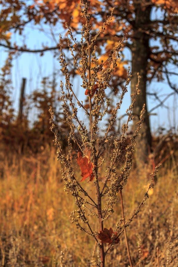 Autumn Time Obweb-spiderweb auf dem trockenen Gras lizenzfreies stockfoto