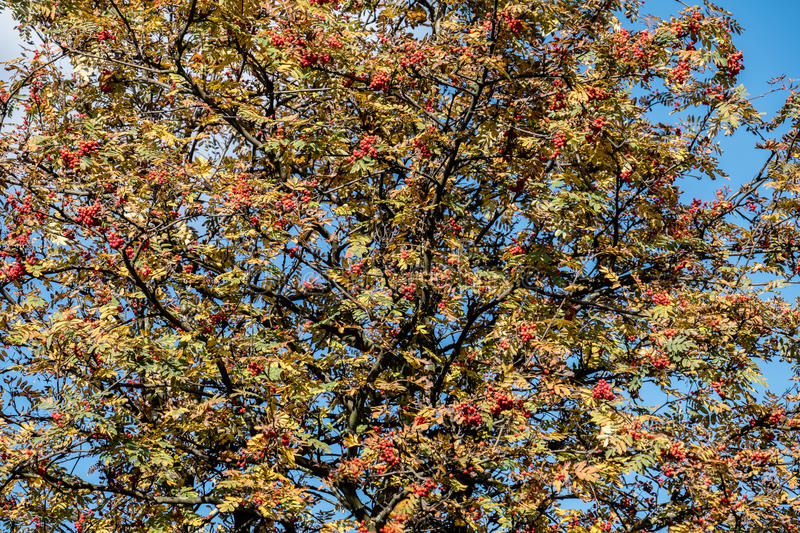 Download Autumn Time Of The Year Has Arrived Stock Photo - Image: 83704913