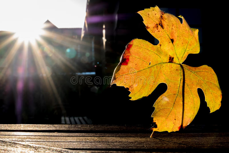 Download Autumn Time Of The Year Has Arrived Stock Image - Image: 83705145