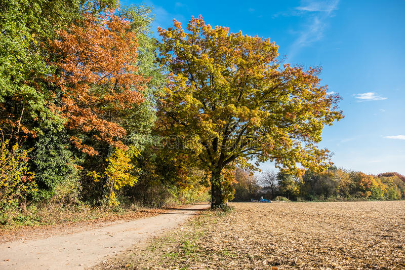 Download Autumn Time Of The Year Has Arrived Stock Photo - Image: 83705203