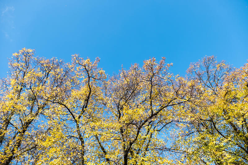 Download Autumn Time Of The Year Has Arrived Stock Photo - Image: 83705451