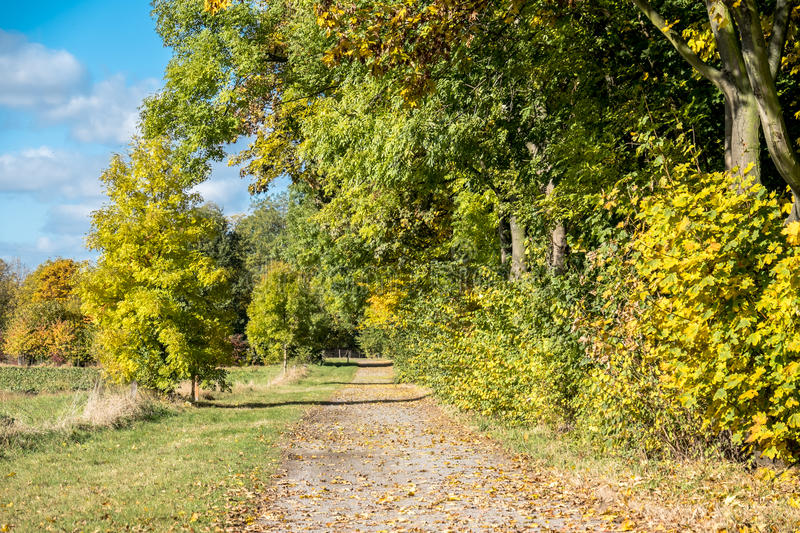 Download Autumn Time Of The Year Has Arrived Stock Image - Image: 83706029