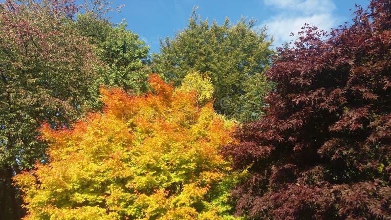 Autumn tints royalty free stock photo