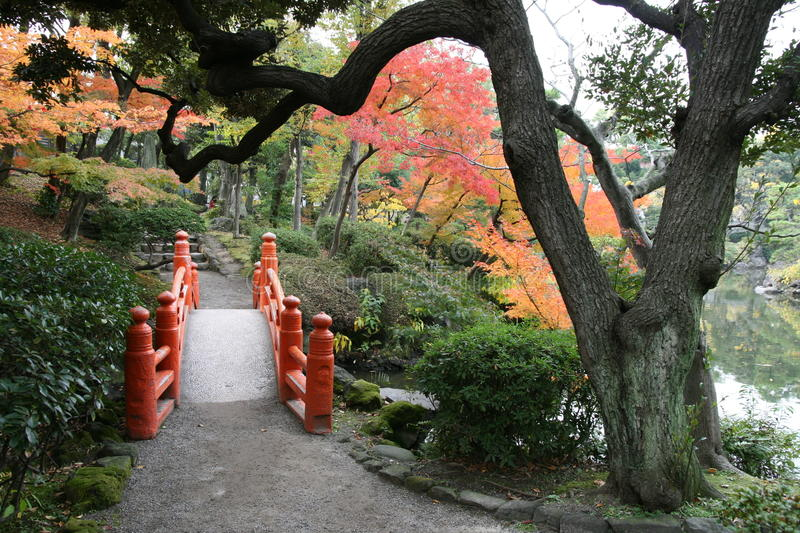 Autumn in Tokyo (3) royalty free stock image
